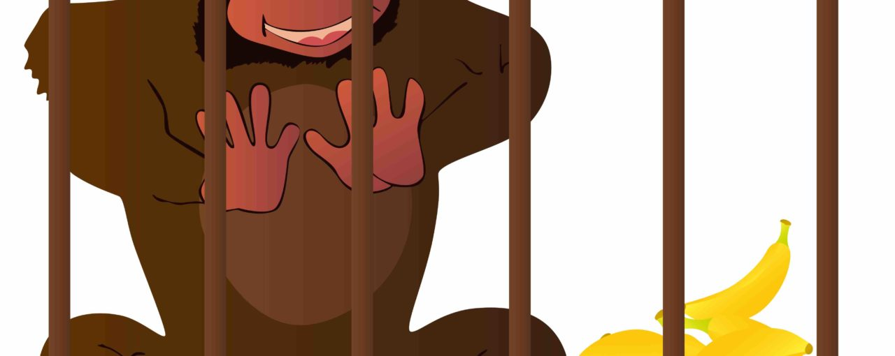 Monkeying around with corporate policy